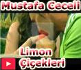 mustafa ceceli limon çiçekleri vidyo klipi video klip dailymotion izle
